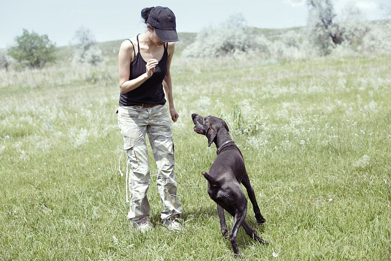 How Much Training Does My Dog Need?